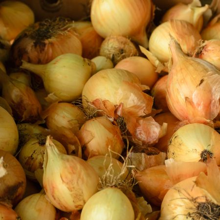 Onions for the CSA Program